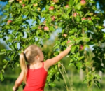 Savvyauntie_applepicking_2